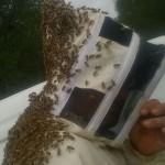 Angelo Borci... alle prese con le sue api