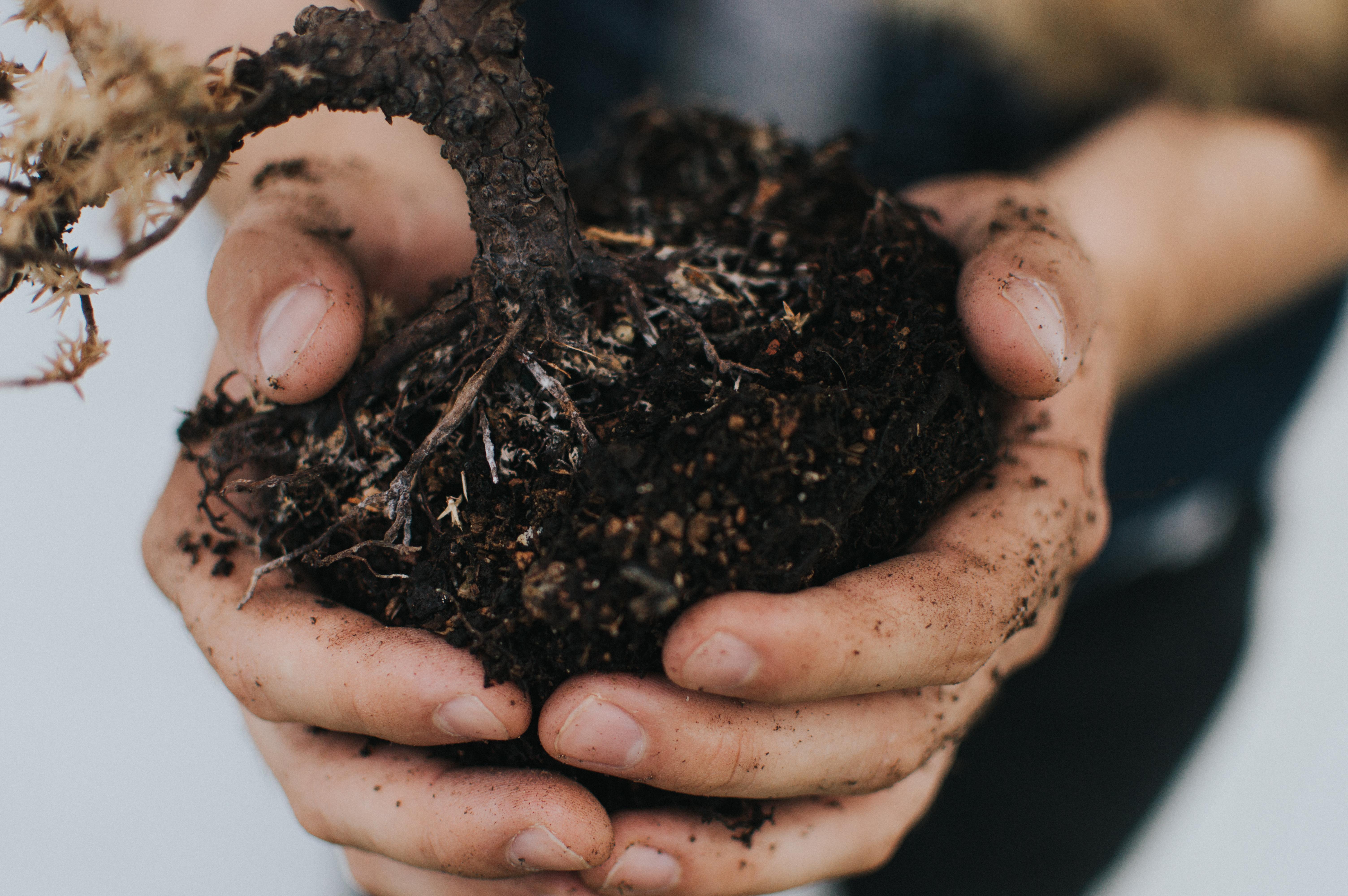 due mani che trattengono una zolla di terra, con delle radici