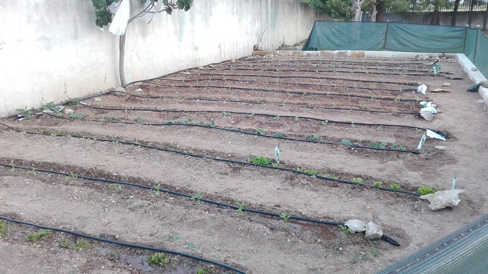 4 metodi ecologici ed economici per nutrire il tuo orto e