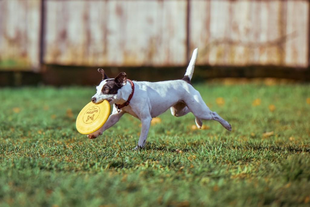 far correre un cane sul prato aiuta contro il caldo
