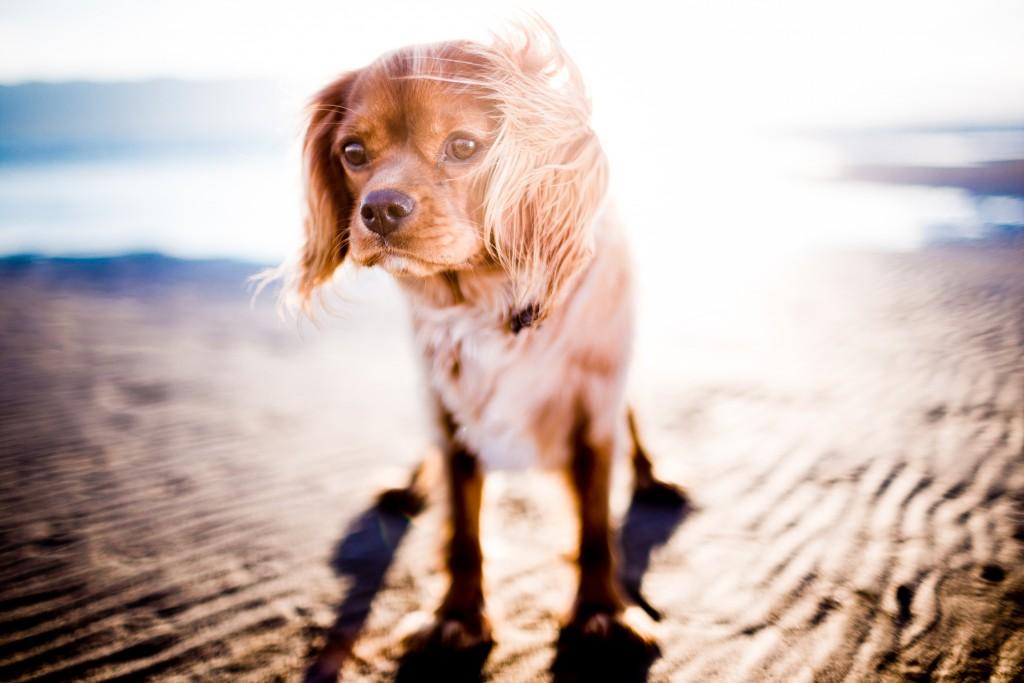 cagnolino al mare per proteggerlo dal caldo andrew-branch